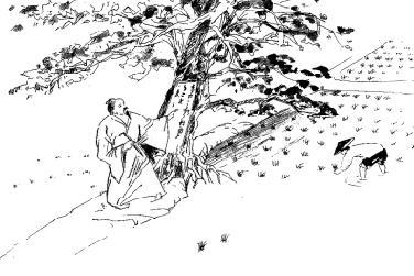 手绘简笔画花树内容图片展示
